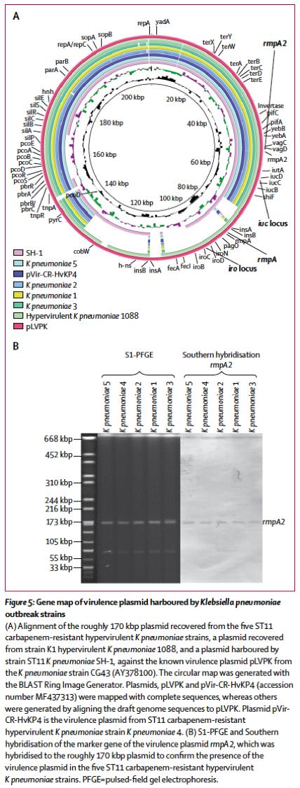 [路透社健康信息]:高毒力耐碳青霉烯肺炎克雷白杆菌出现