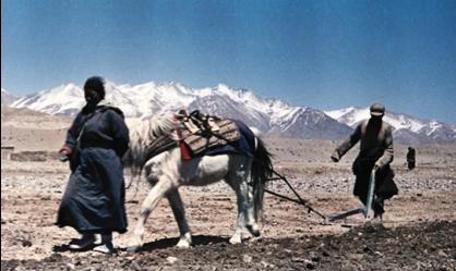 [陈德昌教授]: 1971年西藏阿里的故事(10/15):   打断精神桎梏,开垦耕种
